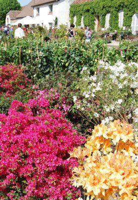 Foire aux plantes à Bézouotte