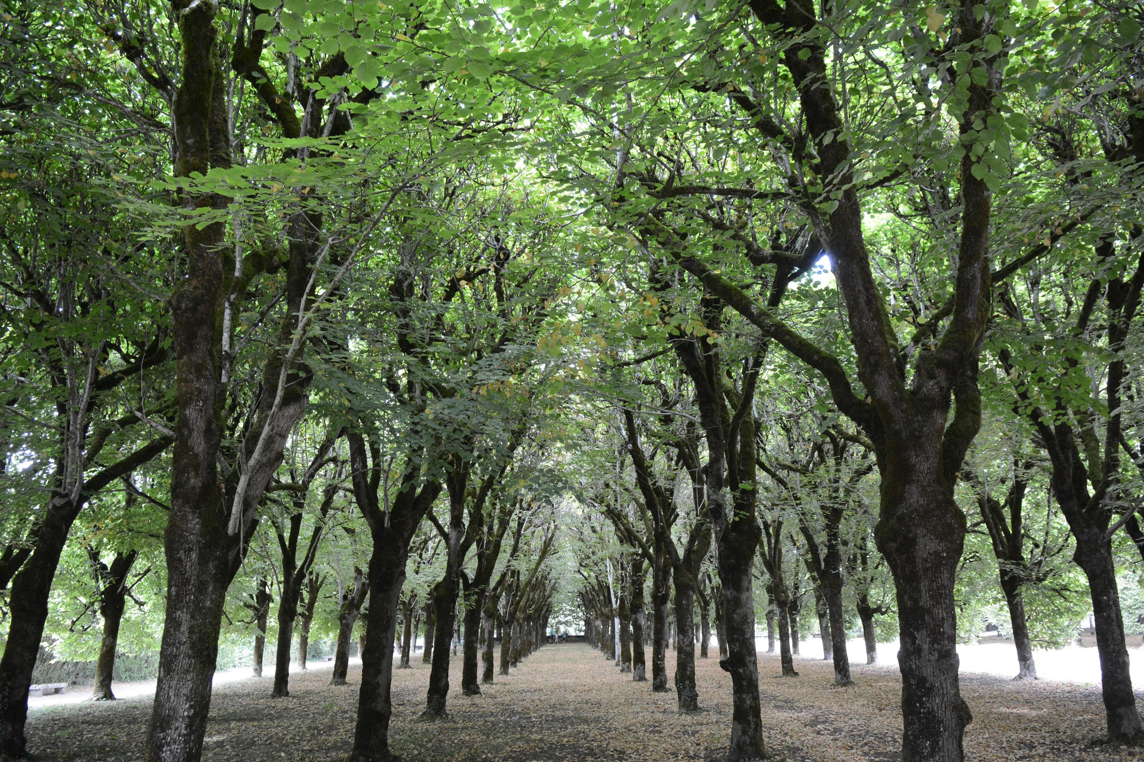 Son parc à la française possède 372 tilleuls taillés en portiques et des buis en boule